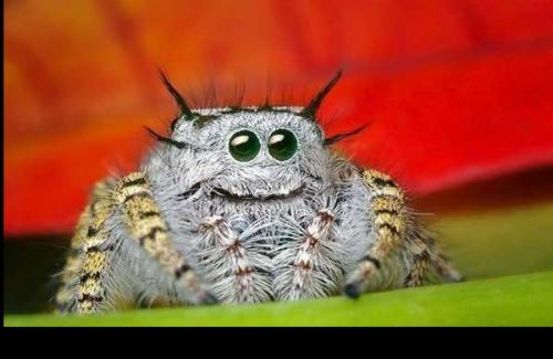 spider_nya