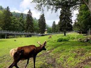 Seteinwasen Park, animales autóctonos y toboganes alpinos, Selva Negra