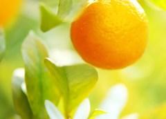 Elixr apelsini õli