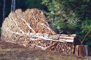 Land-Art-troncos