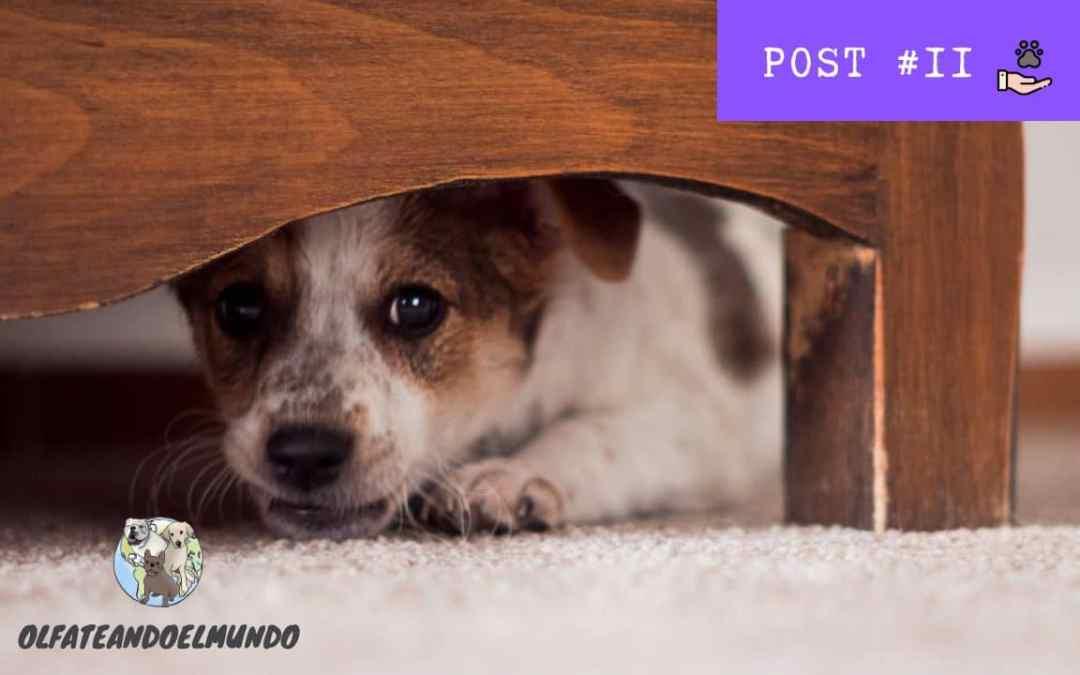 Miedo a los petardos en perros y San Juan