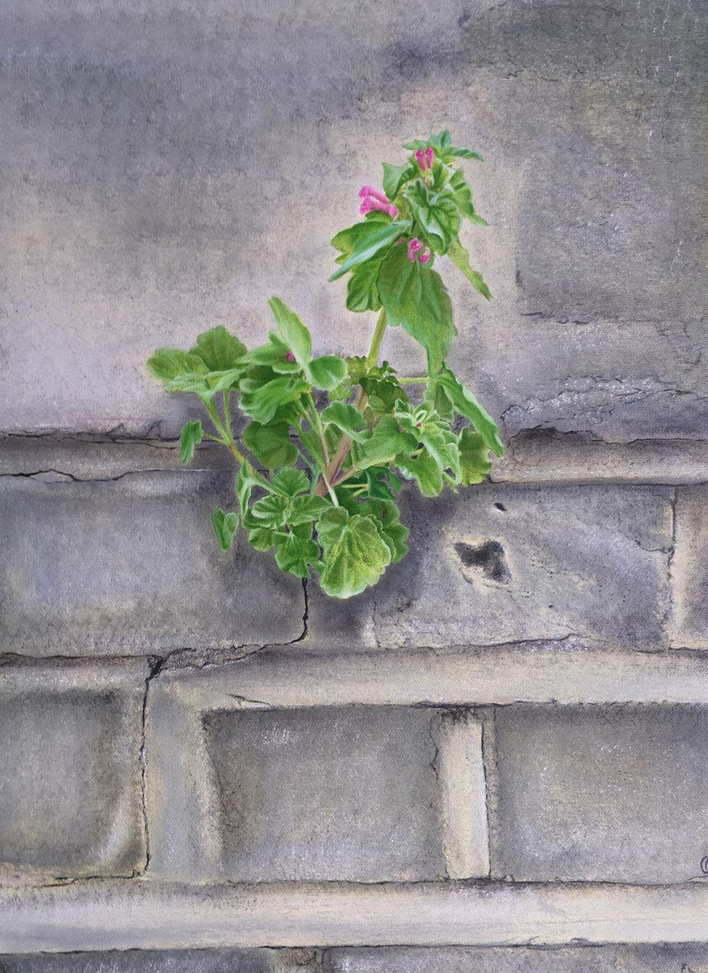 Urban Nature of Wild Pink Flowers