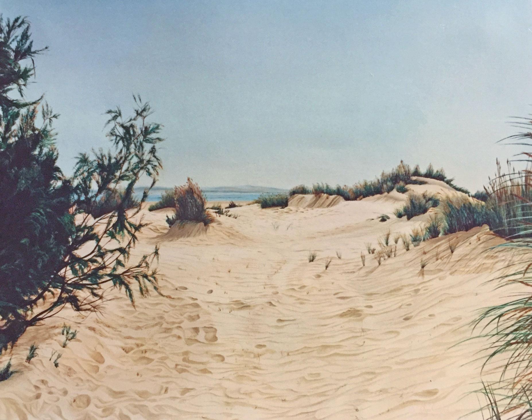 Sand Dunes in Coto Doñana and pine tree