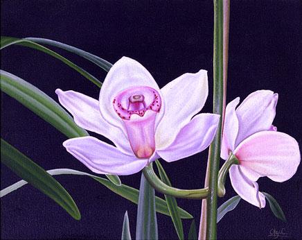 Urban Nature White Orchids