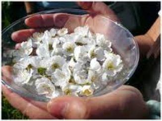 flores cuenco