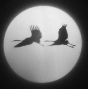 Обложка папки «Сон долгожителя»