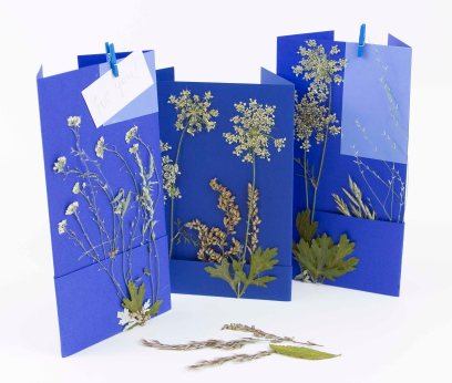 1 nature cards