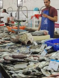 The range of fish is wonderful