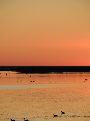 Sunset and coots