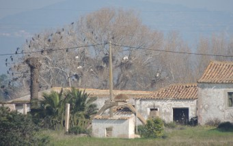 Storks and Cormorants in a tree!