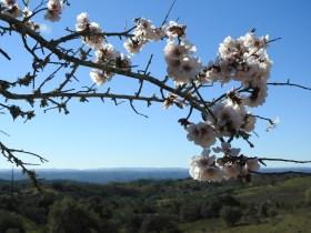 Almond views