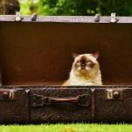 O que levar na mala de viagem?