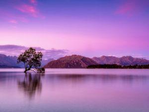 reflet arbre lac montagne