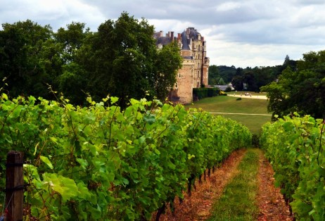 brissac vineyard