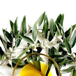 olive-2657693_1920