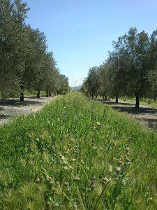 Un olivar lleno de vida