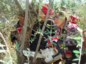 Curso poda. Tierra Verde. 2011.1