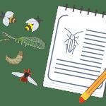 evolucion entomofauna
