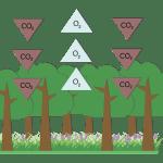 secuestro CO2
