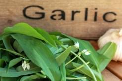 OO&L Wild Garlic Bread Iv
