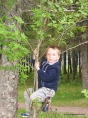 14-052_Skogtur_Namsos_Camp_120605