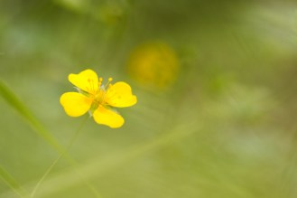 One of many on the bright yellow flowers of tormentil scattered throughout the woodland. Photos from Holme Fen on July 14th 2016.