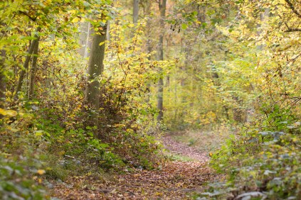 Leaf covered woodland footpath winging through the trees. Photos from a trip to Wakerley Great Wood.