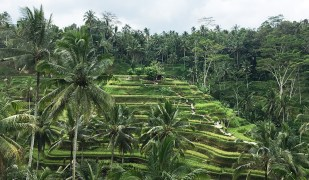 bali,ubud,rice terraces, oliver berry