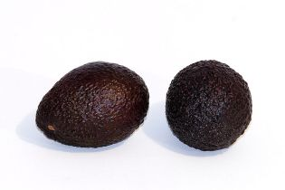 Hass_avocado_-white_background