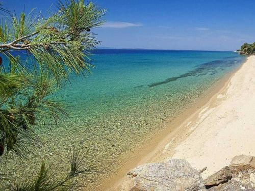 olivetree beach halkidiki