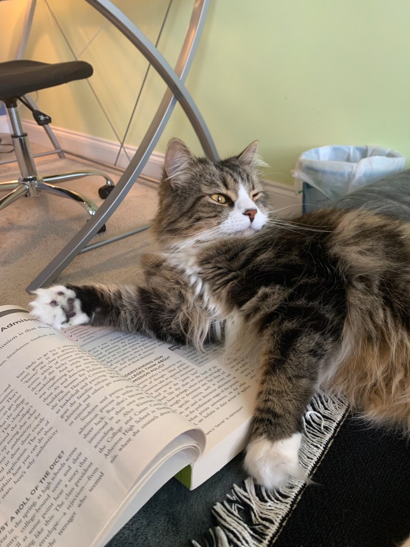 Olivia Gallucci's cat leaning on a book