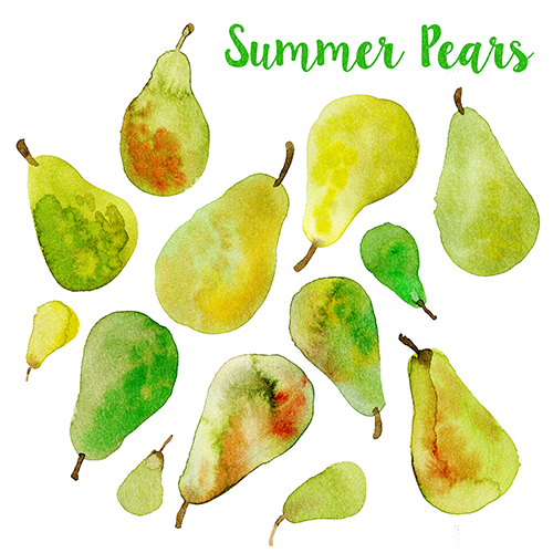 summer pears, watercolor illustration by Olivia Linn