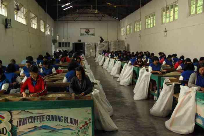 Ouvrières triant les grains de café dans l'usine de Blawan, le 17 juillet 2007
