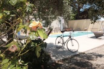 Blooms, bikes