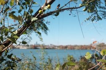 Lady Bird Lake view
