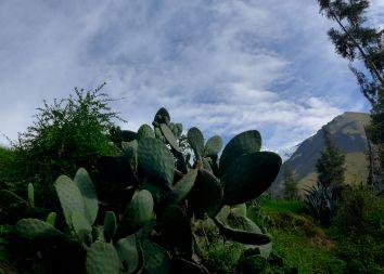 06 perurail cactus
