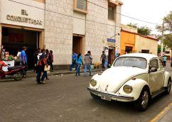 37 arequipa conquistador beetle
