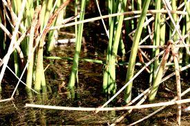 49 lake titicaca duck trap