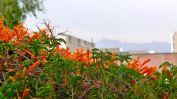 61 arequipa misti restaurant flowers