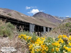 In January the flowers are blooming in the valleys of the Andes.