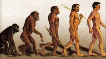 darwins-evolution-monkey-changing-into-man-620x350