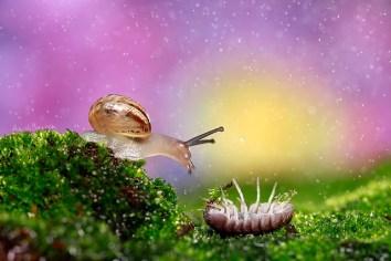 snail_and_woodlouse