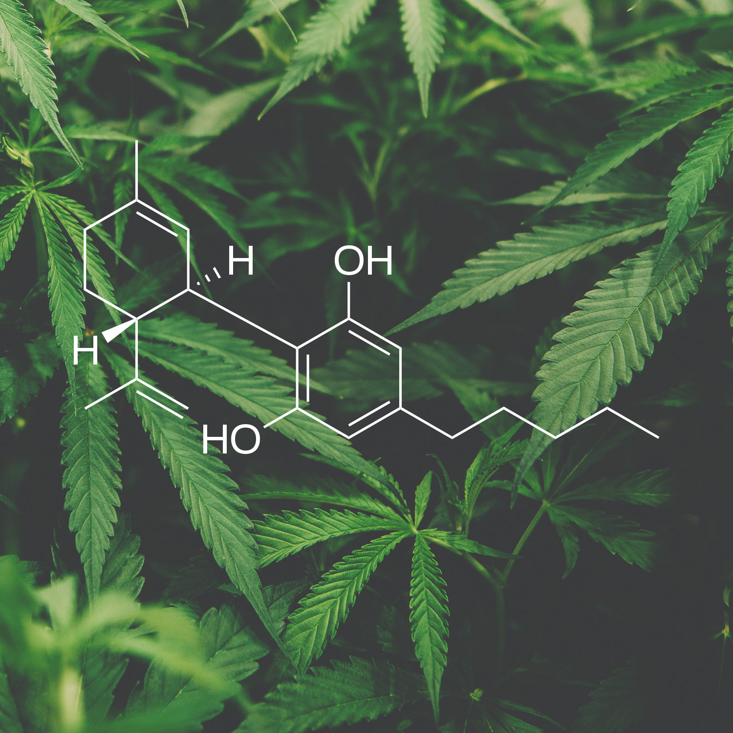 Science of Cannabidiol with Plain English Translations