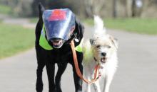 Συγκλονιστικό: Τυφλός σκύλος έχει τον δικό του σκύλο οδηγό (video)