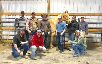Did your farrier to go shoeing school?