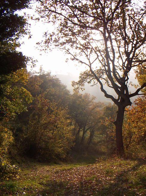 Nei boschi d autunno oltre il cancello for Cabina innevata nei boschi