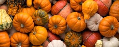 Pumpkins to welcome Autumn