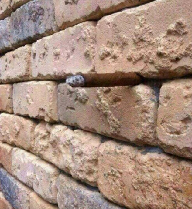 Η οφθαλμαπάτη που έγινε viral Tι βλέπετε ανάμεσα στα τούβλα;