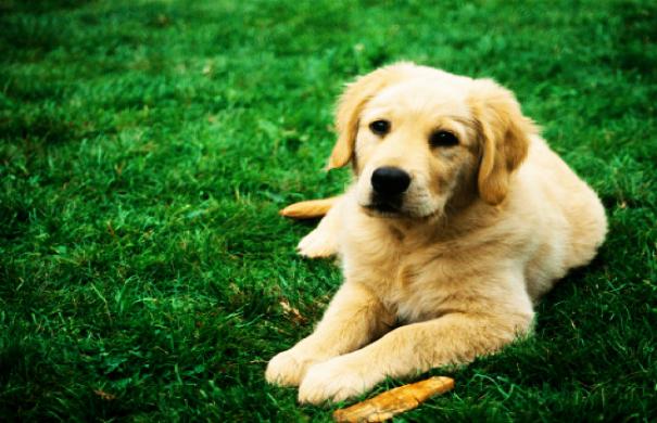 Αυτή είναι η πιο φιλική πόλη του κόσμου για σκύλους