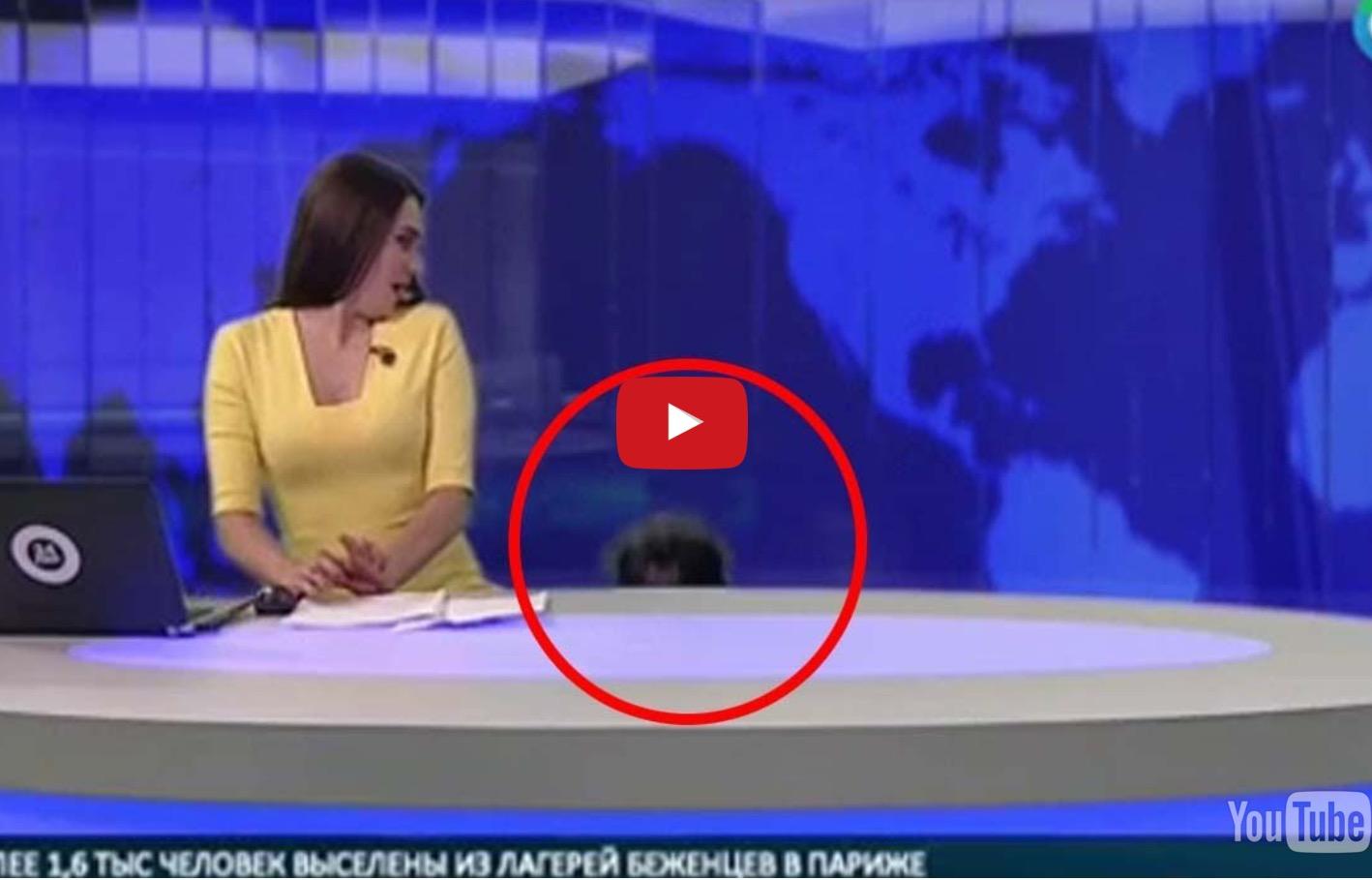 Σκύλος εισέβαλε σε δελτίο ειδήσεων